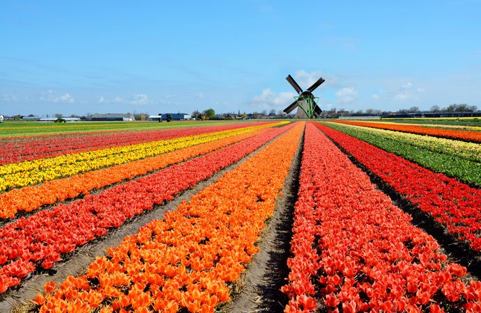 netherlands-honeymoon